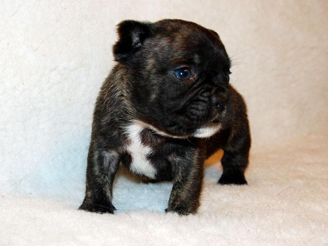 Cucciola Bringee