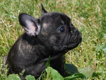 Ebony – Cucciola Bringee